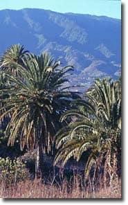 Breña Baja. La Palma