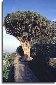 Breña Alta. La Palma. Isla Bonita
